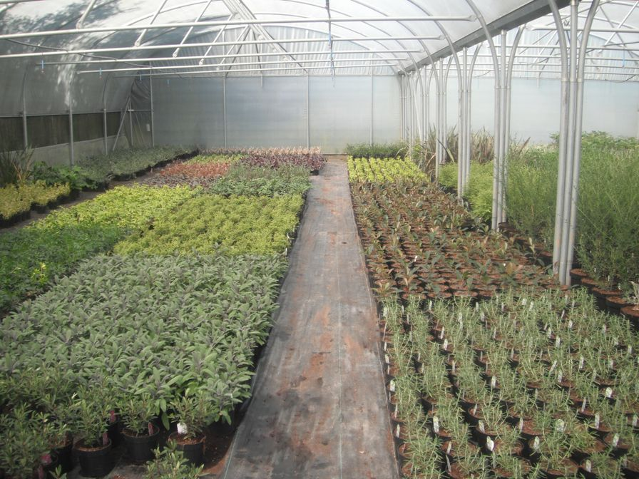 Spinney Nurseries